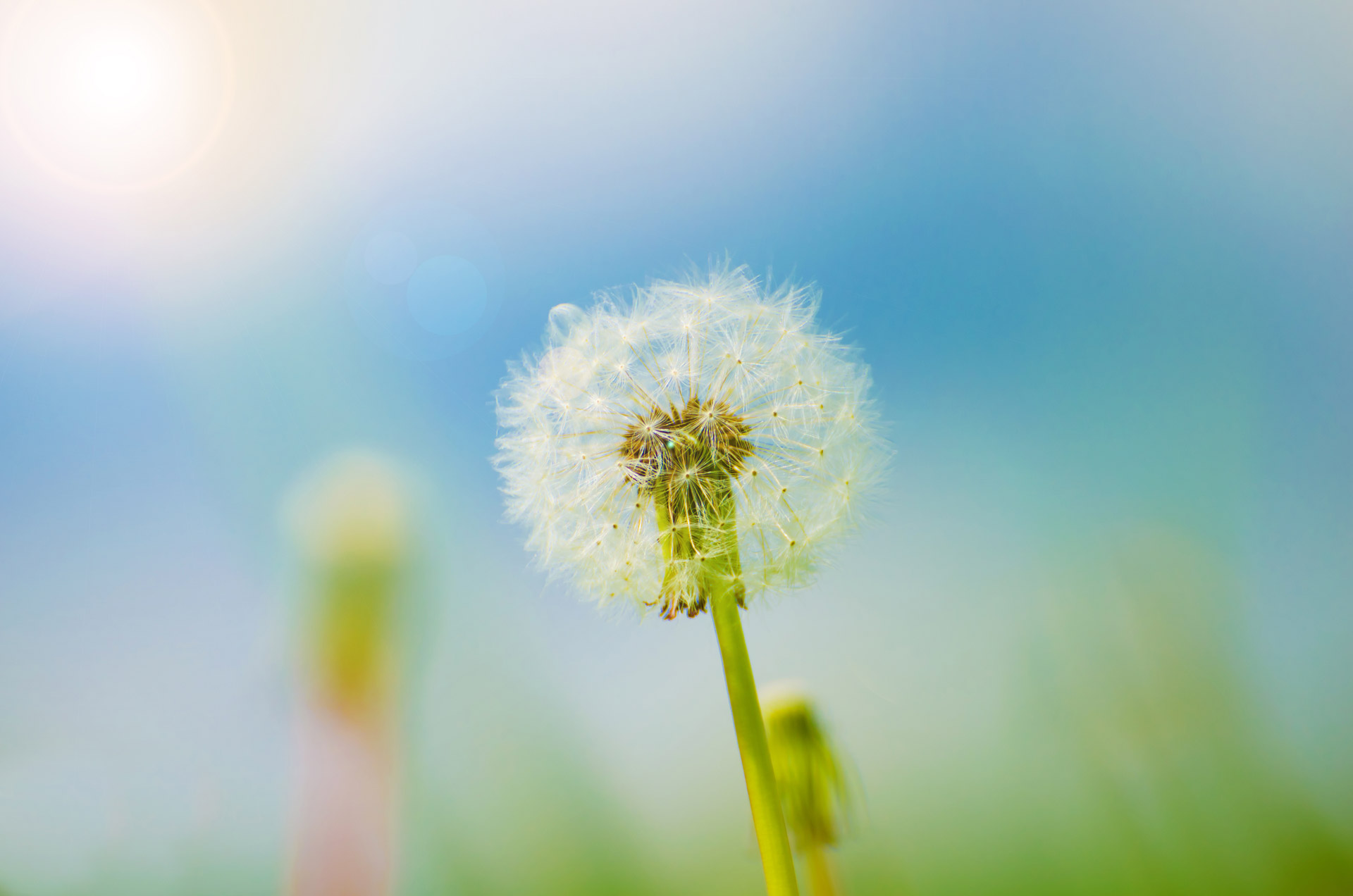 L'acupuncture pour les allergies saisonnières